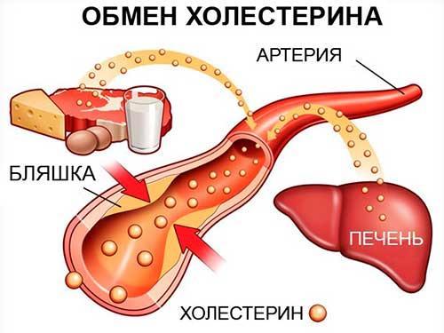 Анализа крови холестерин